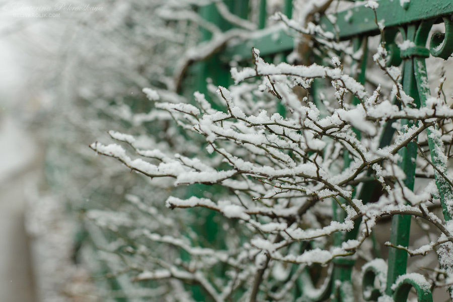 Simf_snow_002