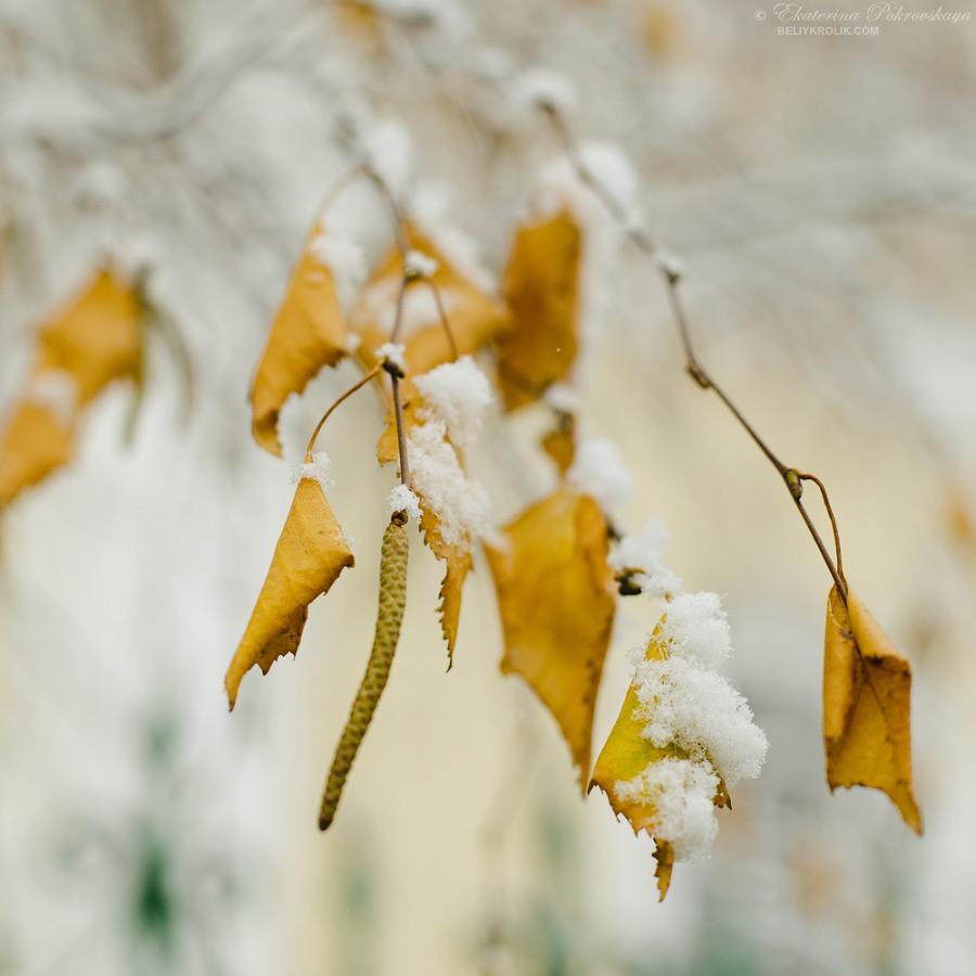 Simf_snow_003