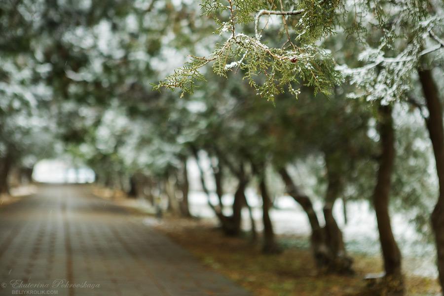 Simf_snow_008