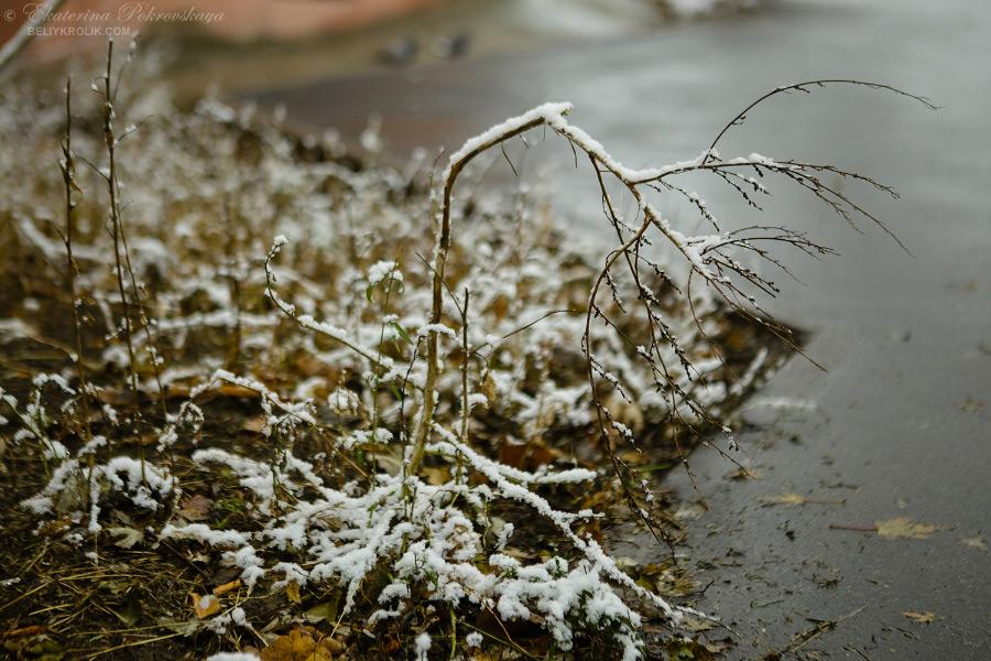 Simf_snow_013