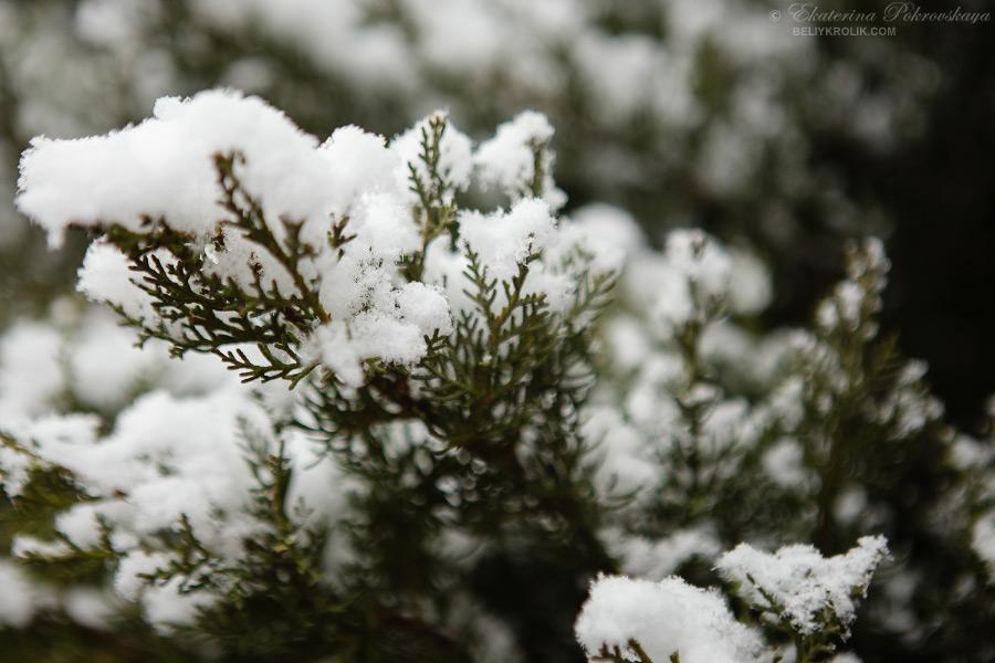 Simf_snow_014