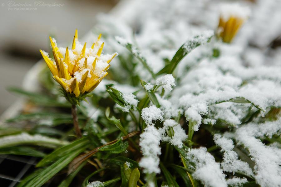 Simf_snow_016