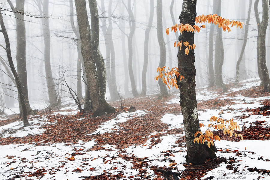 forest_pereval_05