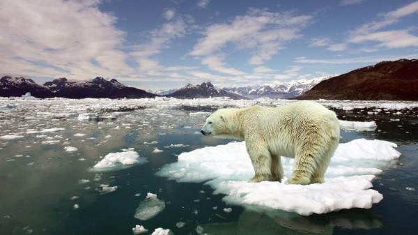 belyj-medved-zver-arktika-moroz-ld-zima-sneg-more-okean-ldiny-gorizont-dal-gory-nebo-oblaka-sherst-mex-xishhnik_png.jpg
