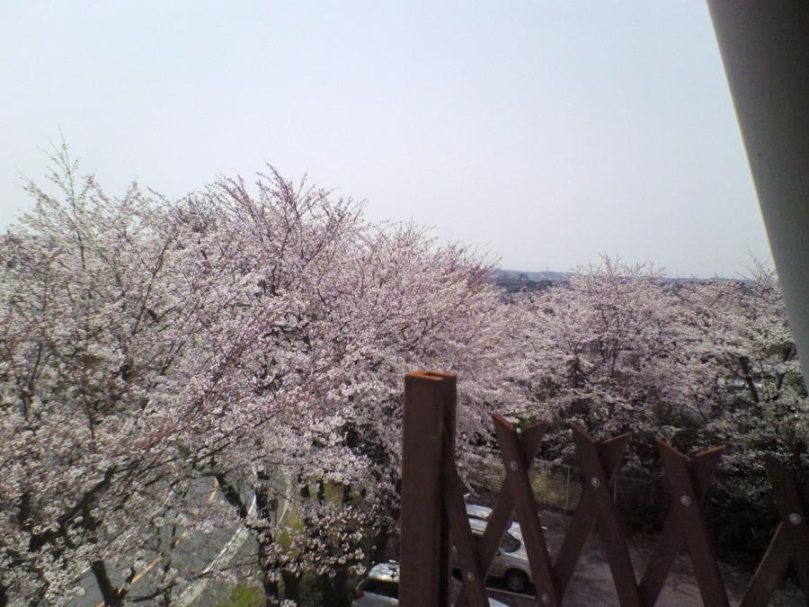 Вид из окна нашей корпоративной квартиры