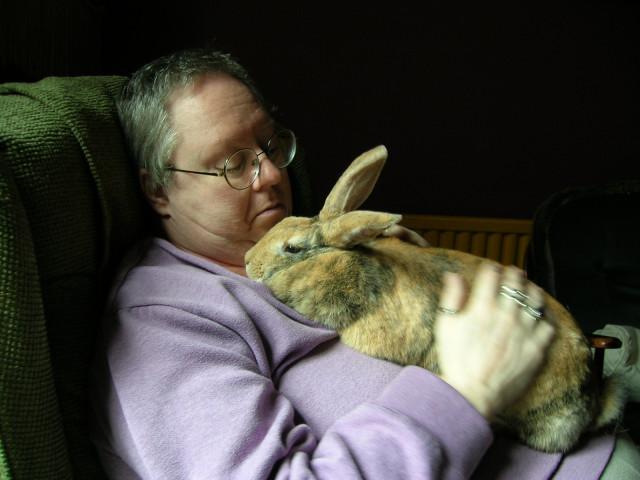 Rachel the Rabbit