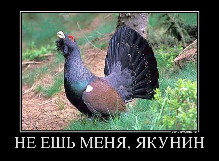 294243_ne-esh-menya-yakunin_demotivators_ru
