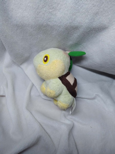 Turtwig Canvas (loved, TTO) $10