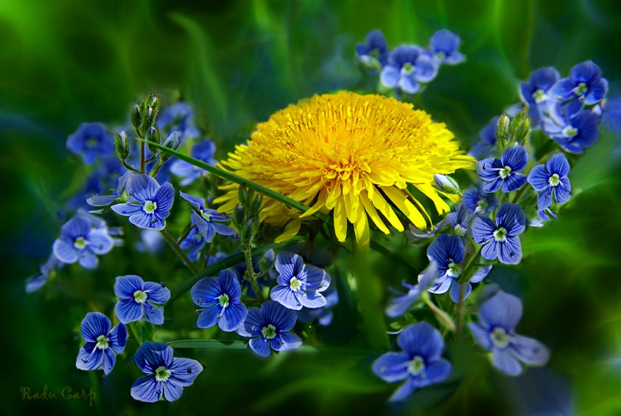 цветы май