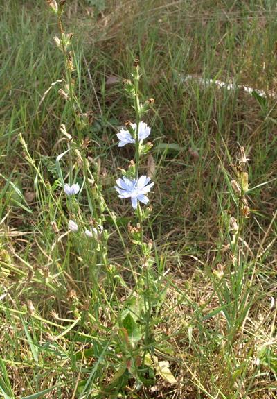 какие травы пить при бронхиальной астме