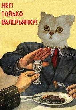 fotozhaba_10