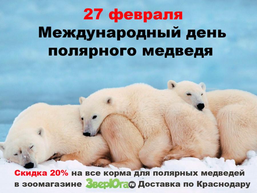 Открытки ко дню белого медведя