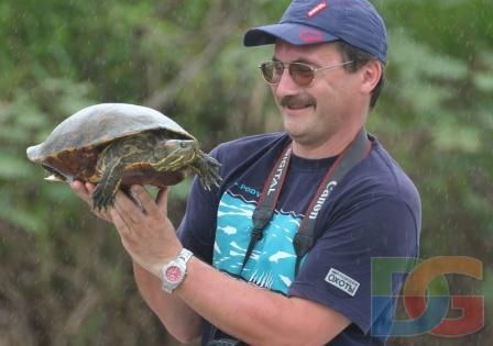 Сколько растут красноухие черепахи