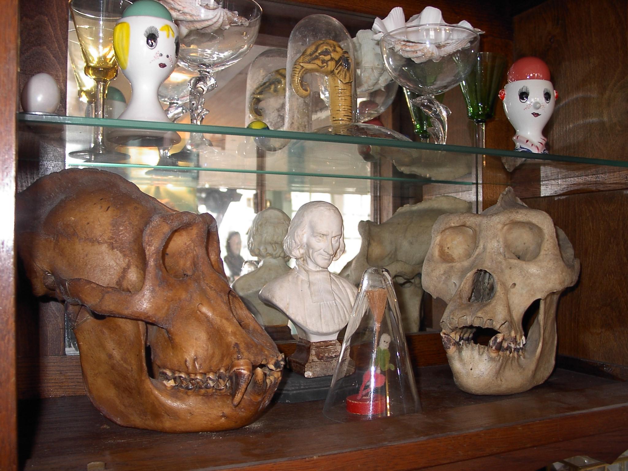 Craniotèque