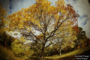golden-brown autumn_900px_q12_copy