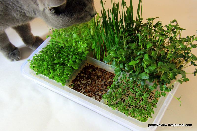 фабрика микрозелени