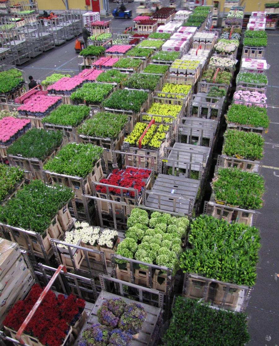 Как купить цветы на аукционе в голландии, купить цветы ярославском