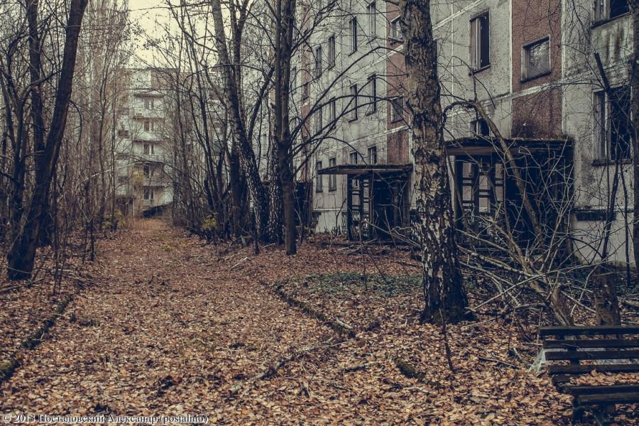 IMG_8266 (Копировать) (Копировать)