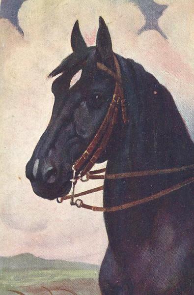Черная лошадь