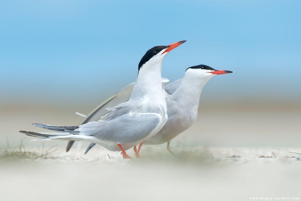 Подборка фотографий с птицами
