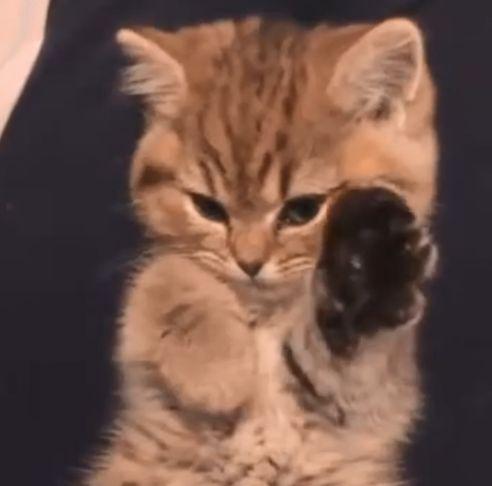 Залипалочка с котиком