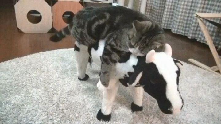 Любимая корова кота Мурзика