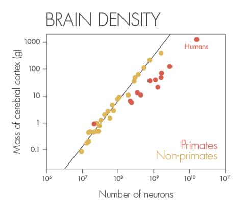 brain-density.png
