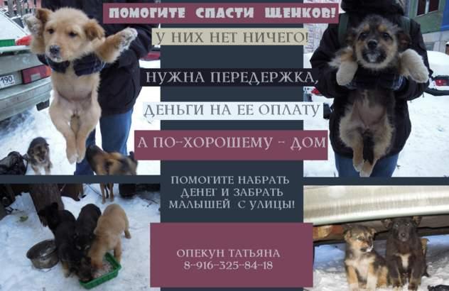 Щенки МАКЕТ_thumb