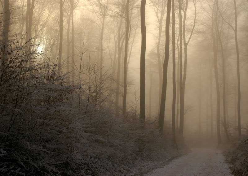 winter-forest