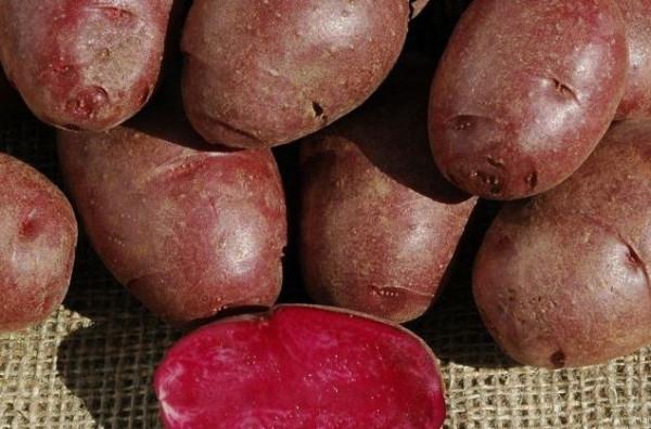 potato_870