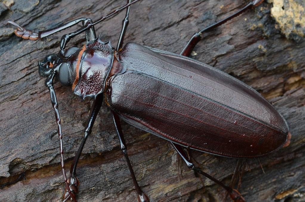 самые большие жуки мира картинки выбор