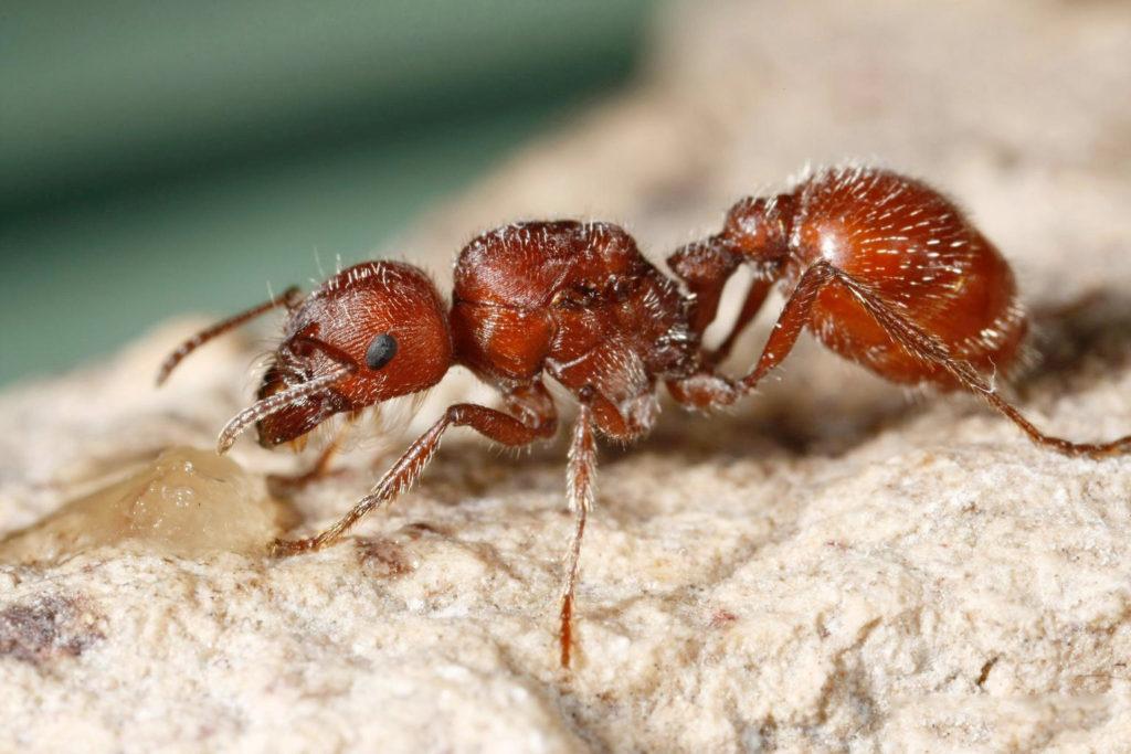 Ядовитые насекомые в картинках