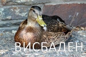 висбаден_мини
