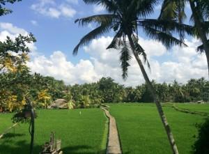 Индонезия 02.JPG