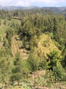Индонезия 14.JPG