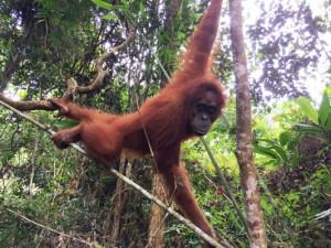 Индонезия 35.JPG