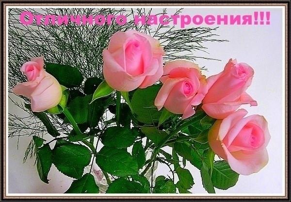 Картинки с розами с добрым утром