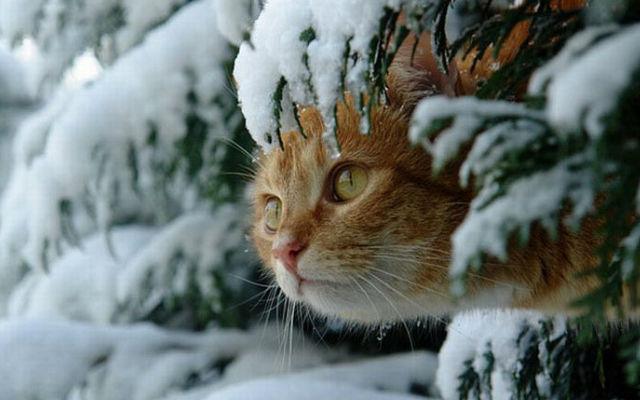 зима_котик