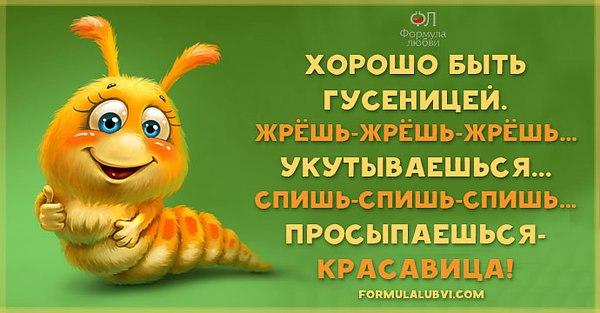 Смешные картинки с цитатой о еде
