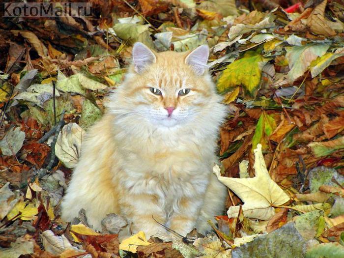 осень_кот