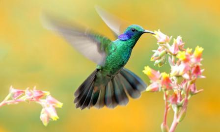 Любовь к природе безмерна