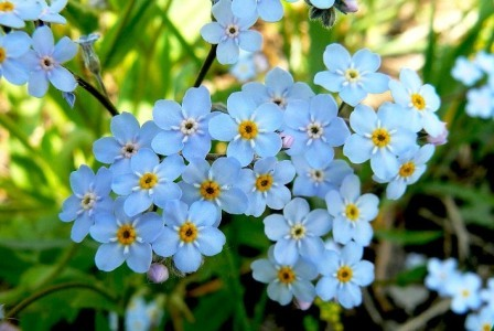 Ярко-голубые цветы