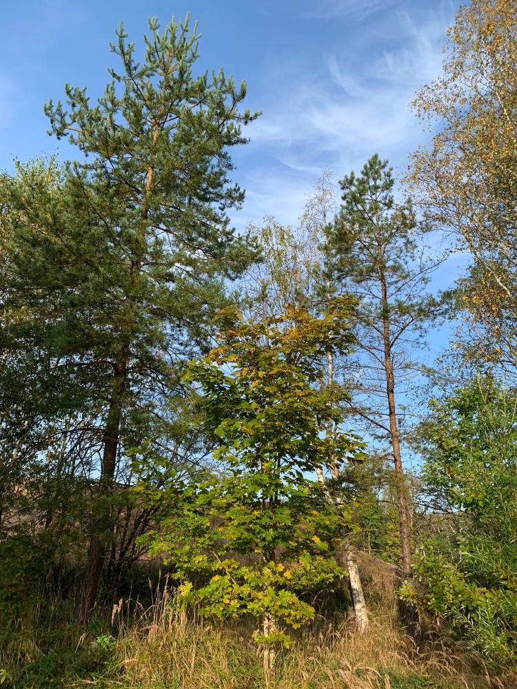 Голубое небо. Желтизна в ещё по большей части зелёной листве... Хочется фотографировать не переставая.