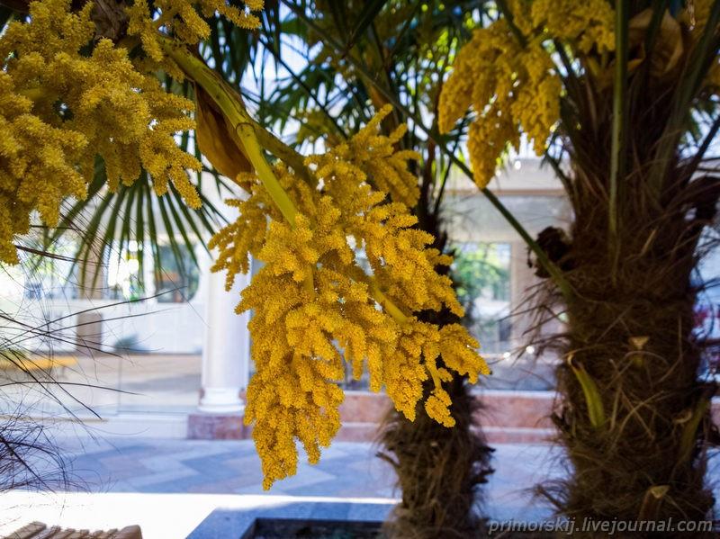 Крым Ялта цветут пальмы