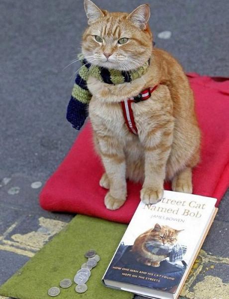 Читать приключения кота боба