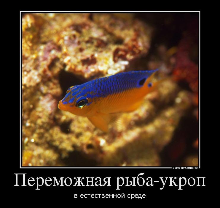 286456_peremozhnaya-ryiba-ukrop_demotivators_to