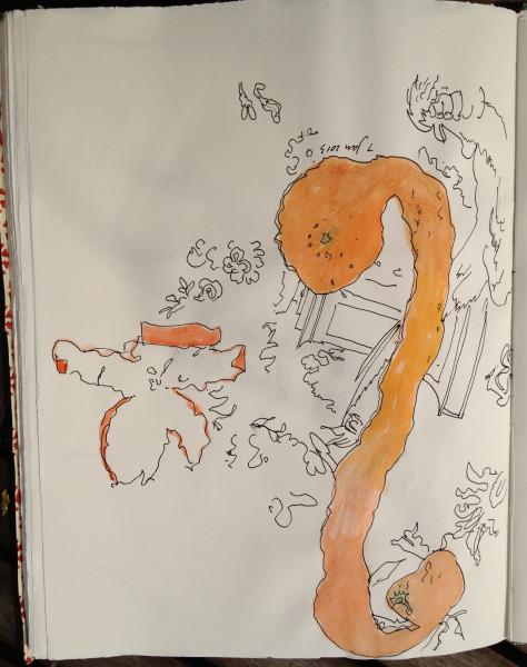 Orange peels and table cloth 3