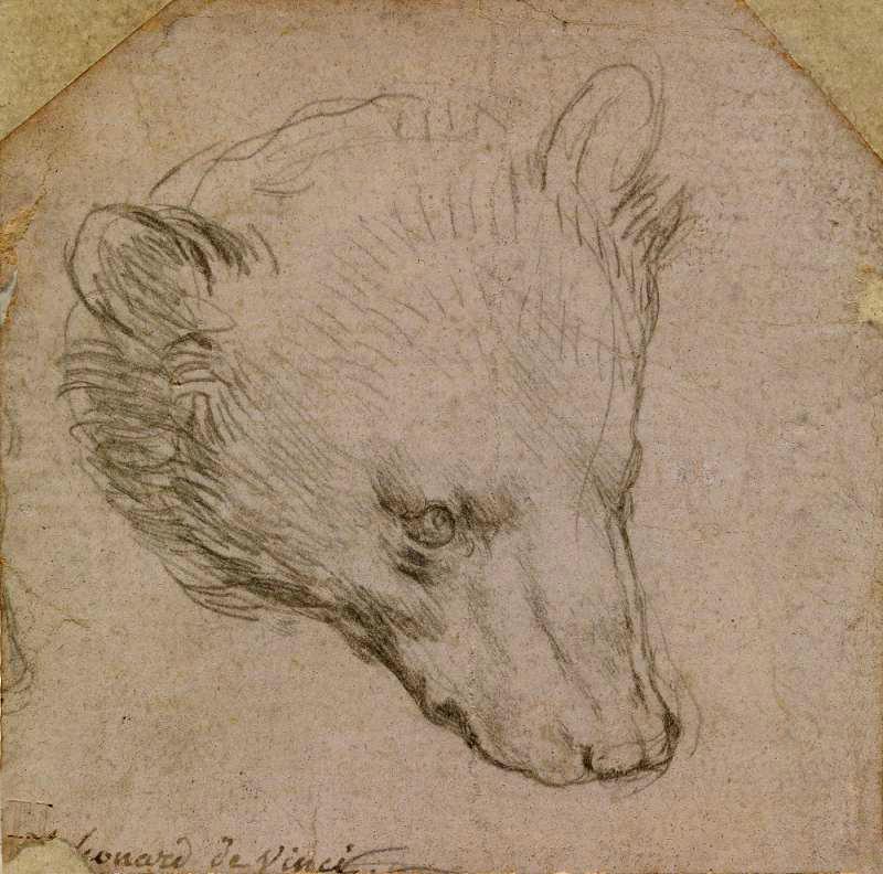 Leonardo-da-Vinchi_-Golova-medvedya