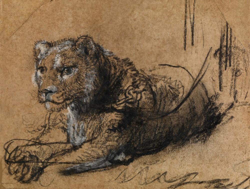 RR-100-Rembrandt-van-Rijn-A-Lioness-Resting-
