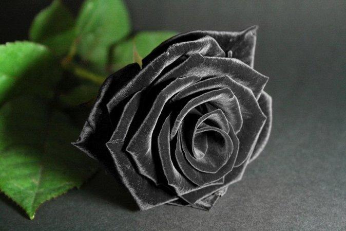 kadife-renginde-siyah-guel-resmi